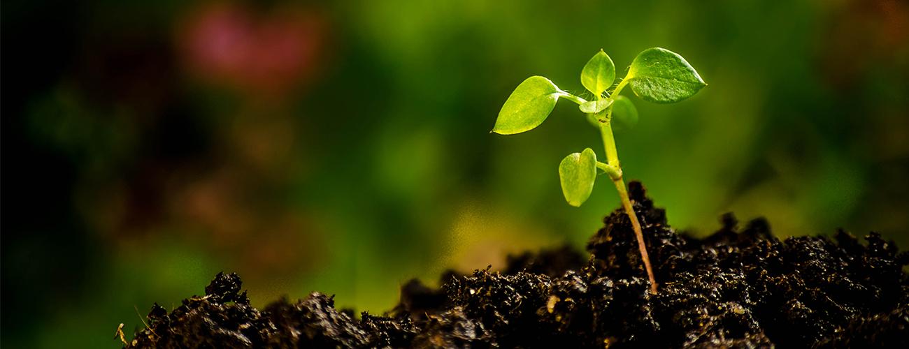 Non-GMO – Organic Slider