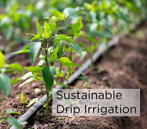 Sustainable subsurface drip irrigation