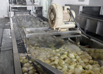 Washing onions prior to dehydration
