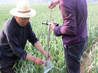 Soil sampling in onion field